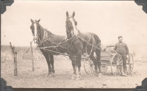 Will's brother, Carl Oscar, and his massive team of horses (ca. 1917)
