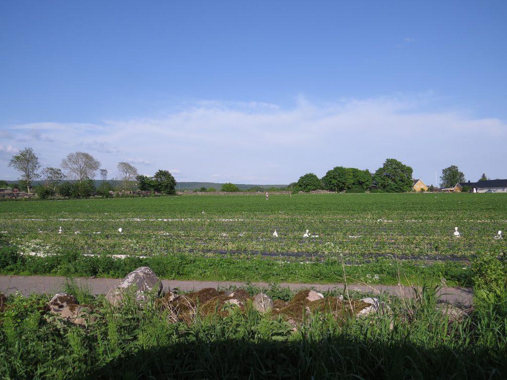 Grödby farm