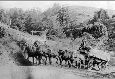 A Mattole Valley farmer taking a load of apples to market (Humboldt County Historical Society)